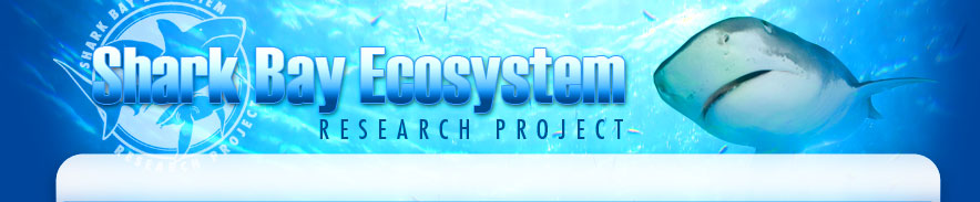 Shark Bay Ecosystem Research Project